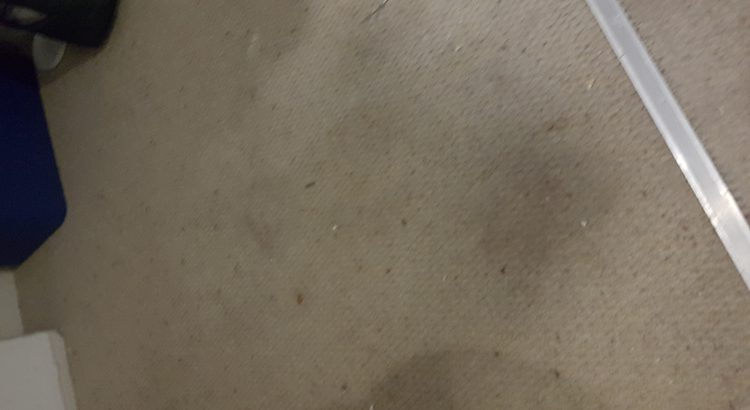 Carpet cleaning in Orpington, BR6 postcode area