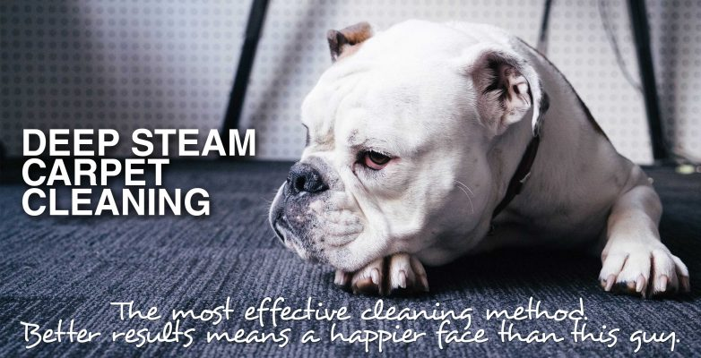 deep steam carpet cleaning - mvir cleaning company