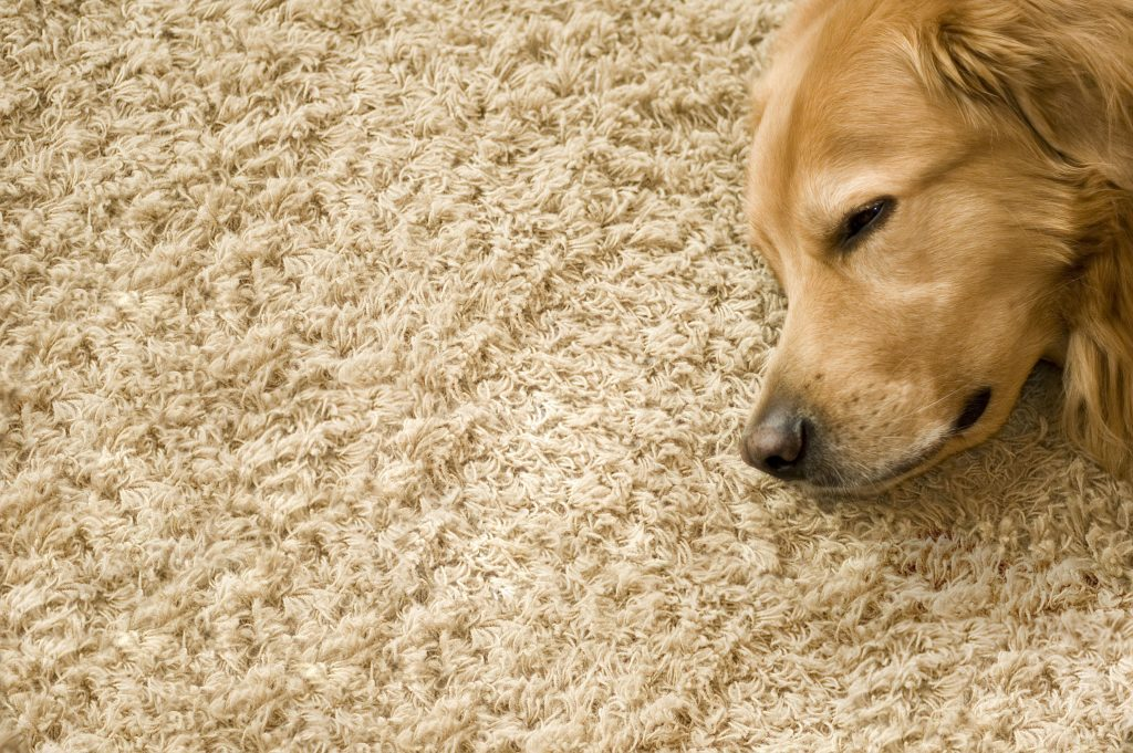 Carpet Cleaning Balham - mvir cleaning company