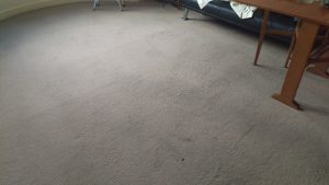 Carpet cleaning in Oxted, RH8 postcode area