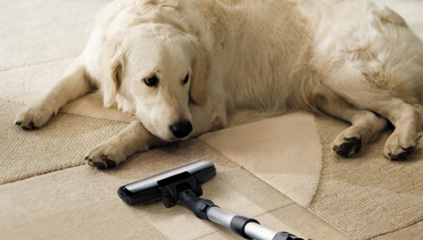 Carpet Cleaning Tips for Pet Owners
